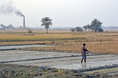 Farmer working their rice field