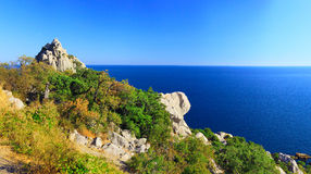 South part of Crimea peninsula, beach landscape. Pine royalty free stock image