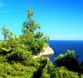 South part of Crimea peninsula, beach landscape. Pine stock photos