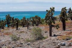 South Plaza Island, Galapagos Royalty Free Stock Photos