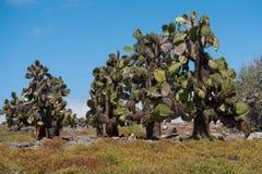 South Plaza Island, Galapagos Royalty Free Stock Image