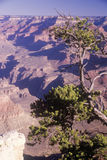 South Rim of the Grand Canyon Royalty Free Stock Photos