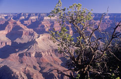 South Rim of the Grand Canyon Stock Image