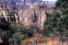 South Rim of the Grand Canyon from Moran Point. Shot starts with the scrub grasses and trees at Moran Point on the South Rim of the Grand Canyon and spans part Stock Photography