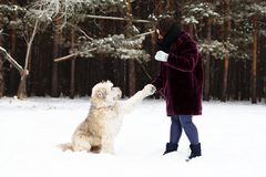 South Russian Shepherd Dog is giving a paw its owner on a background of winter forest. royalty free stock photography