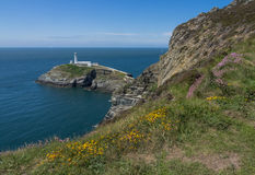 South Stack Lighthouse - flowers Royalty Free Stock Photos