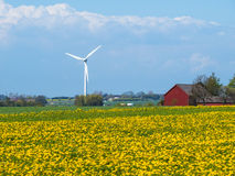 South Sweden. The wind generators on the blossoming fields in south Sweden Royalty Free Stock Photography