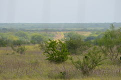 South Texas Landscape Royalty Free Stock Images