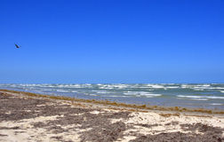South Texas Seascape. View over the Gulf of Mexico from the barrier of Mustang Island, south Texas, United States, showing a brown pelican in flight and numerous royalty free stock image