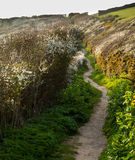 South West coast path near Port Quin, Cornwall Royalty Free Stock Image
