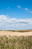 South West Coastal Path, Dorset, UK. The South West Coastal Path, Dorset. Part of The Jurassic Coastline of England. View back across farmland Royalty Free Stock Photo