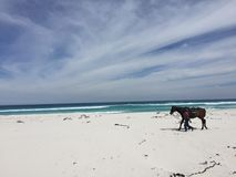 Southafrica-Cape town-Beach Royalty Free Stock Photo