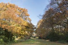 Southampton Common in Autumn stock image