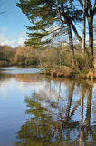 Southampton Common. Reflections on the ornamental pond at Southampton Common royalty free stock photo