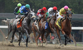Southbeachsandy Wins an Allowance Race Royalty Free Stock Photo