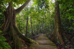 Southeast Asian Jungle Stock Photo