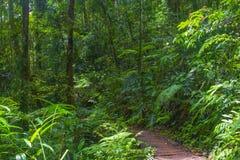 Southeast Asian Jungle Royalty Free Stock Photos