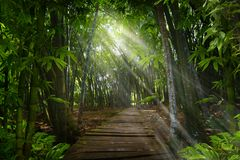 Southeast Asian Jungle. Thailand jungle with sunbeams coming out among the branches stock photo