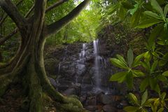 Southeast Asian Jungle with waterfall. Waterfall in southeast asian Jungle Stock Images