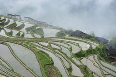 Southeast Guizhou Congjiang overtime terraces stock photo