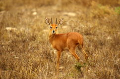 Southern african animals Stock Image