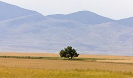 Southern Alberta Rural Scene Prairie Royalty Free Stock Photo
