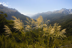 Southern Alps. Nice bunch of grass on the very top of Key Summit in the heart of National Park Fiordland, Southern Island, New Zealand royalty free stock photography