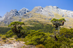 Southern Alps. Alpine terrine and trees on the very top of Key Summit in the heart of National Park Fiordland, Southern Island, New Zealand royalty free stock photos