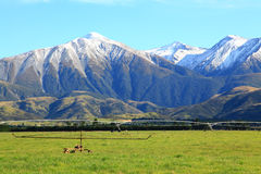 Southern alps in New Zealand Royalty Free Stock Image