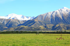 Southern alps in New Zealand Royalty Free Stock Images