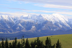 Southern Alps, New Zealand. View of Southern Alps, New Zealand green grass in foreground with pine trees Royalty Free Stock Photos