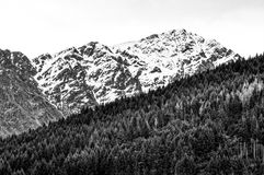 Southern Alps vs Pine plantation royalty free stock photography