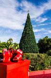 Southern California Christmas. A beautiful decorated tree with lights outdoors with a beautiful blue sky as a backdrop. Plants and gifts adorn the foot of the Stock Photography
