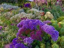 A Southern California Flower Garden. A Souther California flower garden in spring in San Diego royalty free stock photos