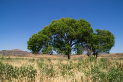 The Southern California landscape. Royalty Free Stock Photography