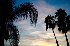 Southern California Palm Trees Fronds Silhouetted Against Dramatic Evening Sunset Horizontal. Shot Pink Blue Yellow Rose Gold Sky in Long Beach Dreamy Travel Royalty Free Stock Images