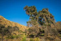 Southern California Wilderness Growth Stock Images