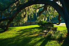 Southern Charm-Benches and Oak tree in a park. Historic park in the Old South. Back-lit Spanish Moss early in the morning Stock Images