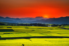 Free Southern China In Spring Stock Photos - 47980733
