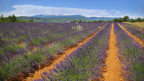 Southern France, lavender field in Provence Royalty Free Stock Photos