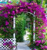 Southern Garden Gate With Bouganvillea royalty free stock images
