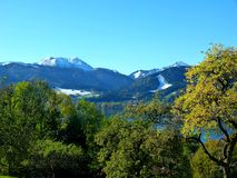 Southern german landscape with trees in the foreground - a lake and snow-covered mountains as a back-ground. Green foliage in front of blue-blue mountain and royalty free stock photo