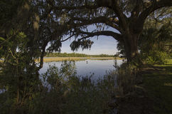 Southern Landscape. A South Carolina low country (swamp) view of a river beneath a oak tree with Spanish moss Stock Image