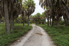 Southern nature in the Fort De Soto Park, Florida, USA. A dirt road winding between the palms in the Fort De Soto Park, Florida, USA Stock Photography