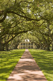 Southern Plantation, with oak tree path Stock Images