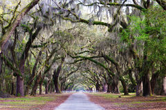 Southern Plantation, with oak tree path Stock Photo