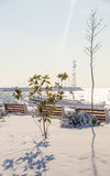 Southern plants in the snow-covered shores of the Black Sea in Pomorie, Bulgaria, winter Stock Photo