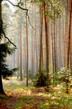 Southern Poland's forests Stock Images