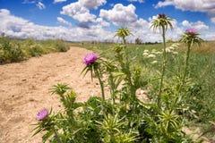 Southern Sardinian countryside Royalty Free Stock Photo