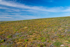 Southern shore of Novaya Zemlya Royalty Free Stock Images